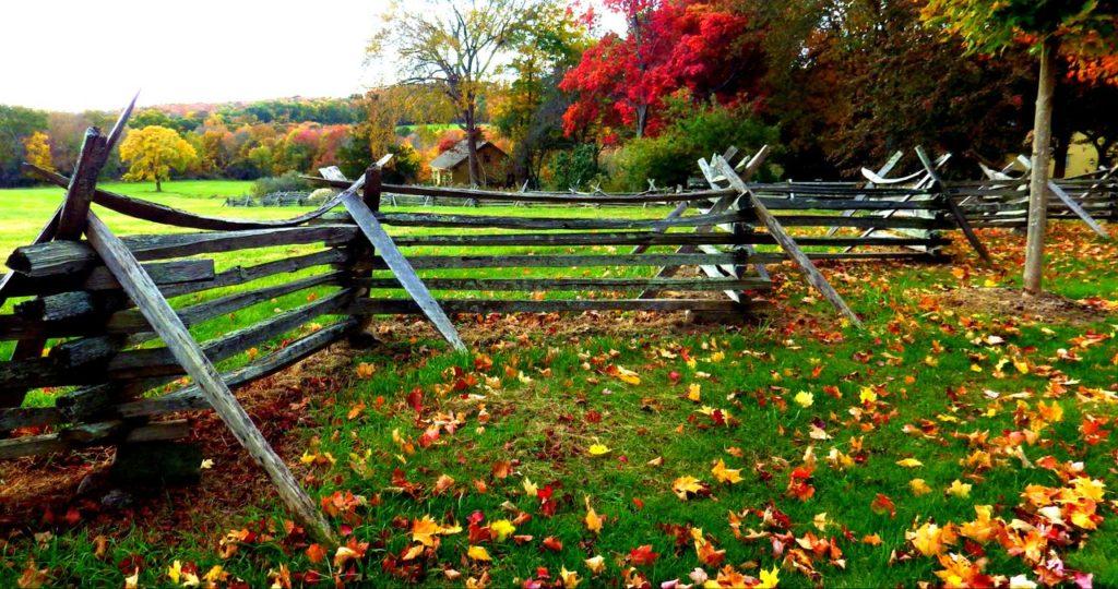 Fall leaves in Pomfret.M. STEPALAVICH